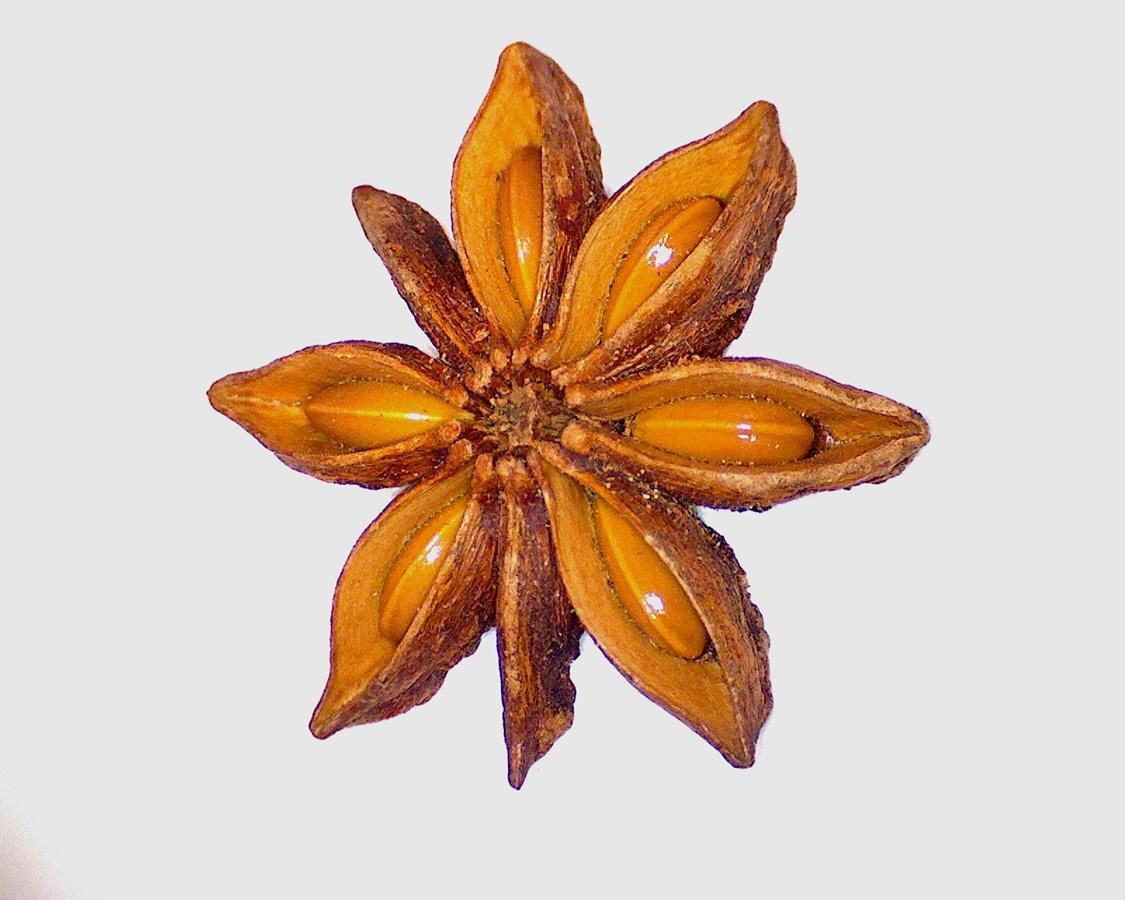 G6 - Foto 03 - Sternanis, geöffnete Frucht mit Samen