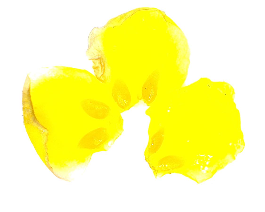 G8 - Foto 06 - Berberitze, Blütenblätter mit Nektarien