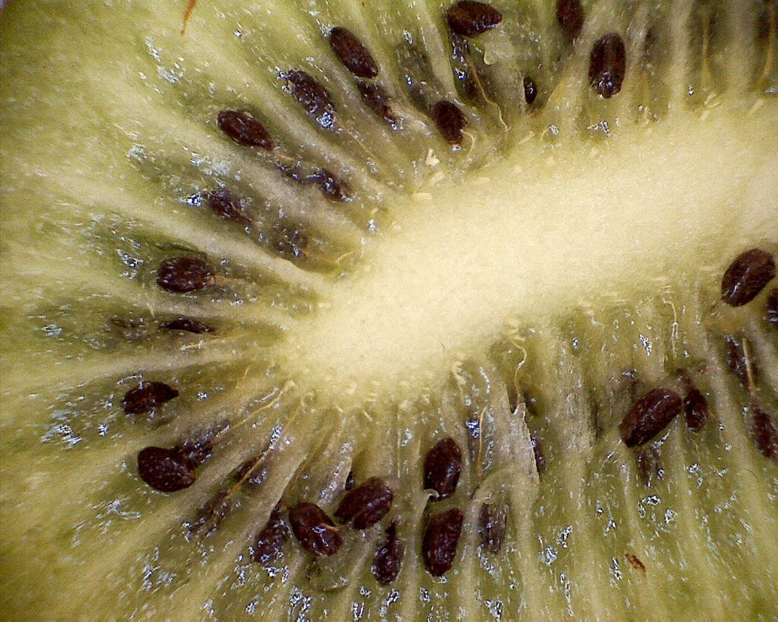 Kiwi 03