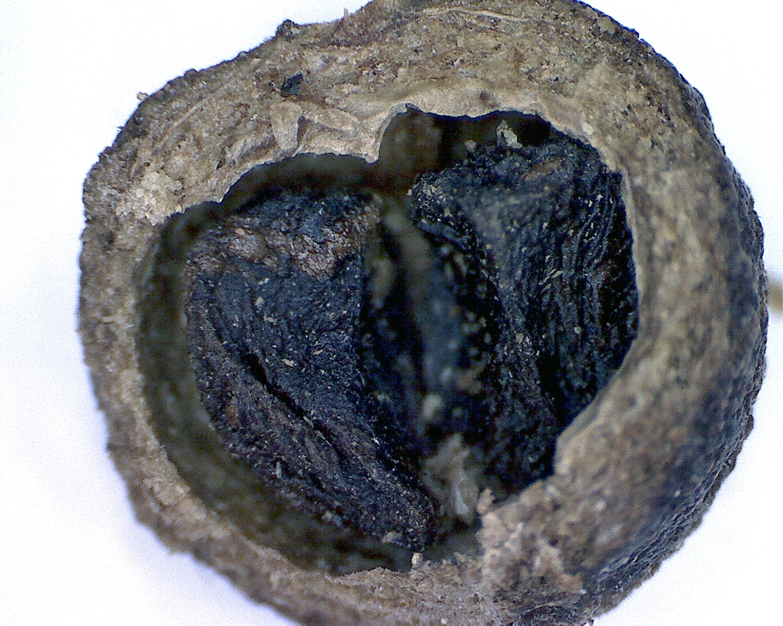 Piment 03