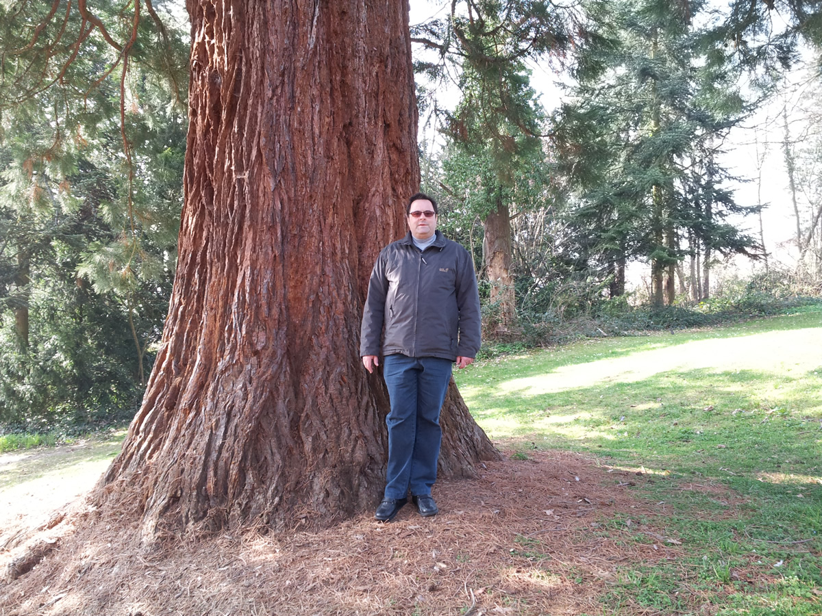 Riesenmammutbaum