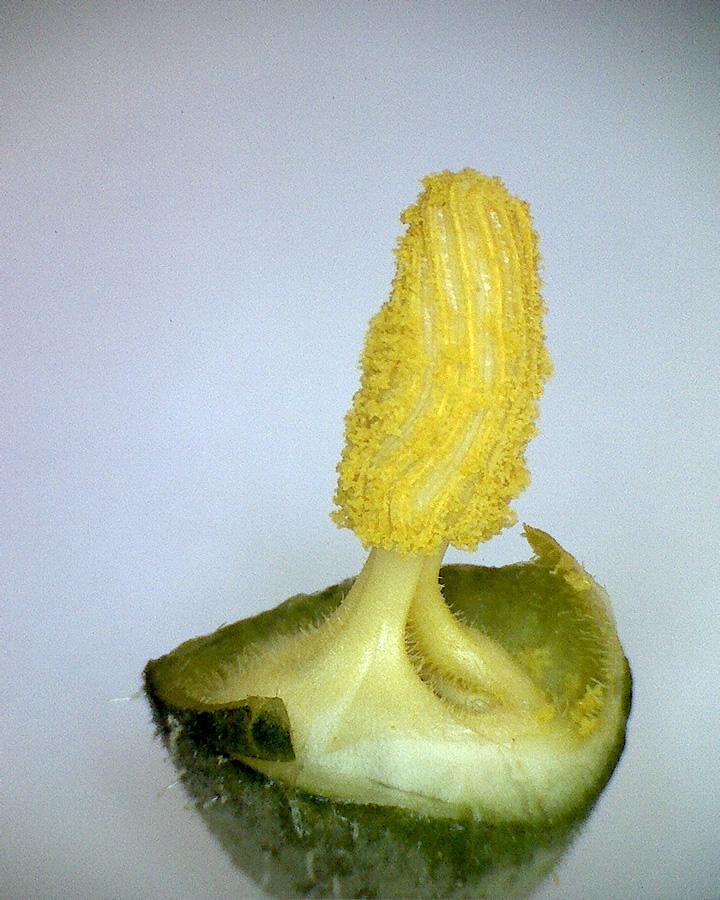Zucchini 06