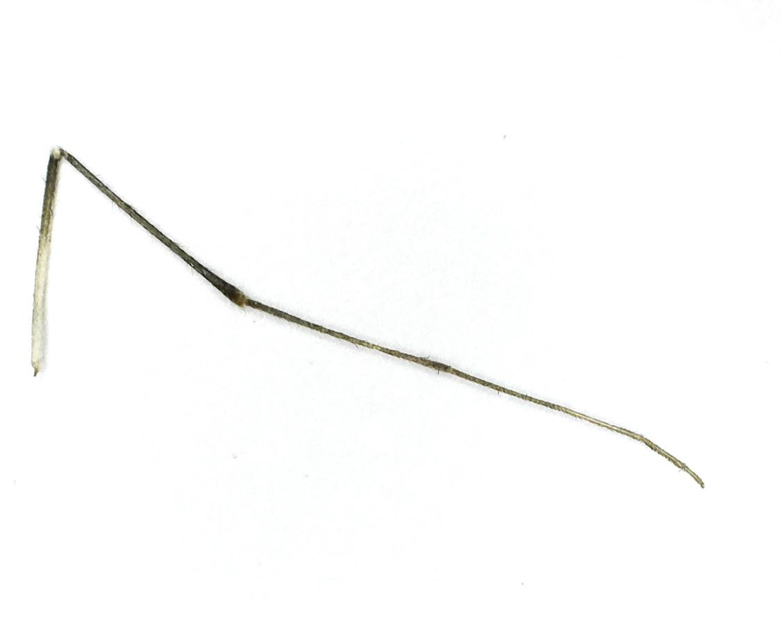 Stechmücke 18