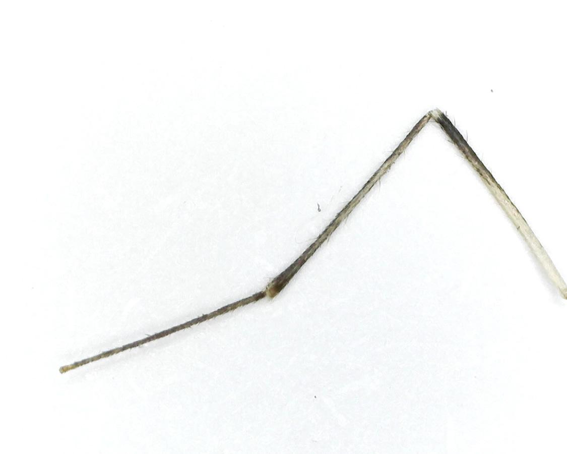 Stechmücke 20