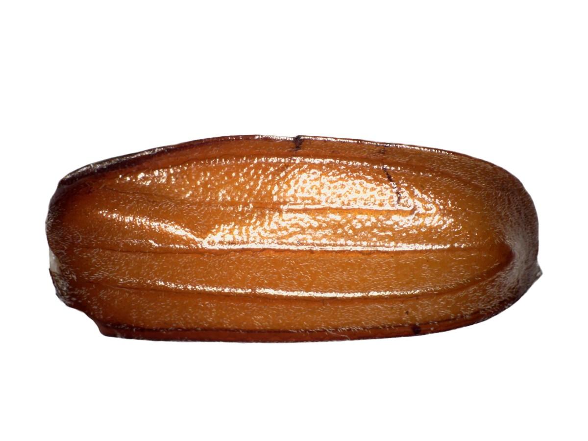 Feldmaikäfer